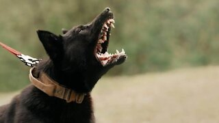 What makes a dog aggressive