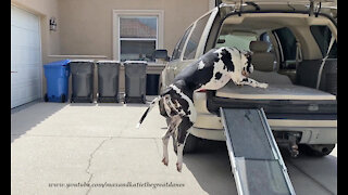 Huge dog doesn't need ramp to jump into SUV