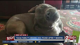 Dog reunited with family after seven months