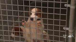 Warrensburg animal shelter closes due to budget cuts