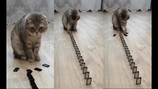 CAT PLAYING WITH DOMINO