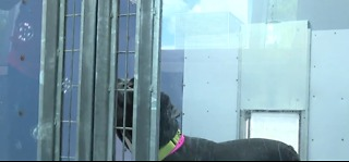 Animal Foundation using bubbles to help dogs