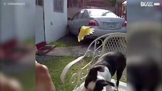Una cagnolina e un pappagallo amiche per la pelle