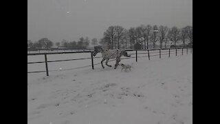 Winterwonderland.. Soo beautiful 🦄❄☃️
