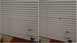 Når du har denne katten trenger du ikke støvtørker!