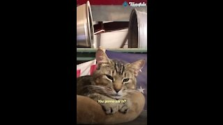 Cat decide to work and greet people