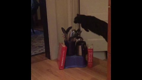 This Cat Is Probably In A Hurry, Because She Keeps Jumping Over Things