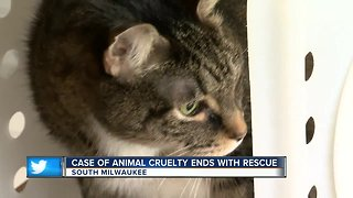 Animal cruelty ends with cat's rescue in South Milwaukee