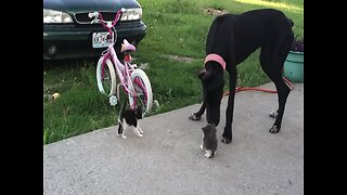 Dog Wants to Make Friends with Kittens