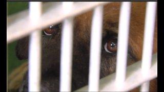 Local congressman push to make animal cruelty a federal crime