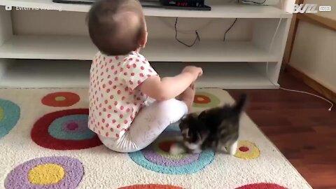 Gatinho dá o seu melhor para brincar com bebé