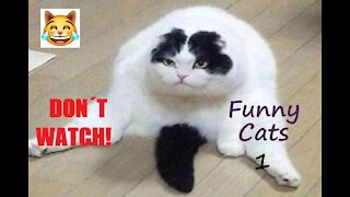 Do Not Watch These Funny Cats - 1