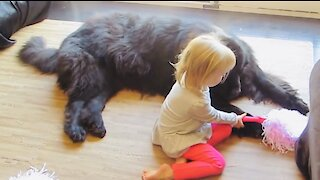 Toddler tries to teach her huge puppy how to be a cheerleader