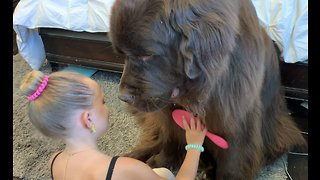 Best doggy grooming session you'll see today!