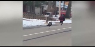 Woman saves boy being chased by turkey