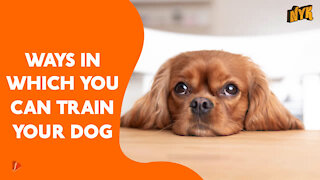 Top 4 Ways To Train Your Pet Dog
