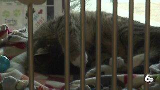 Boise Council Member proposes a change in the city's animal code sections