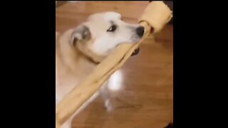 Dog get a little bit too excited