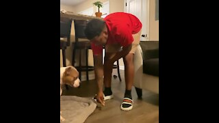 Dog tackles difficult patience challenge with flawless perfection