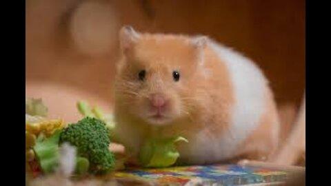 Feeding my little Hamster