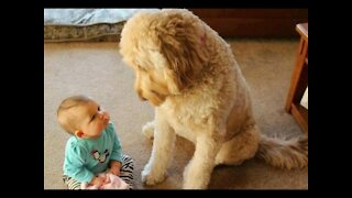 Adorable Babies Playing With Dogs and Cats- Funny Babies Compilation!