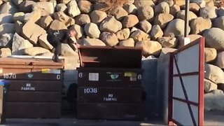 Police officer rescues bear cub stuck in dumpster