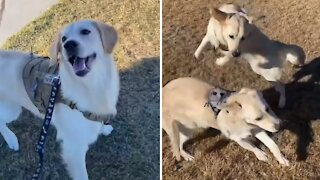 Dog gets a surprise visit from his sister