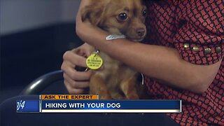 Ask the Expert: Hiking with your dog