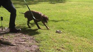 Idaho Chukar Foundation teaches dogs and owners how to avoid snakes