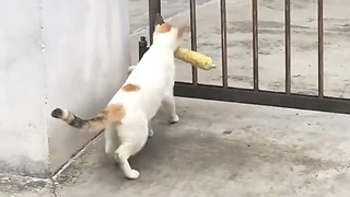 Hilarious..!! Cat Can't Trough The Gate With Mouth Carrying a Food