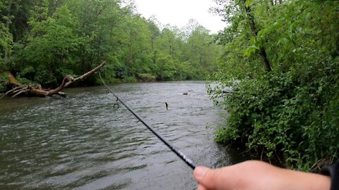 Wet and Wild trout Fishing Part Deux