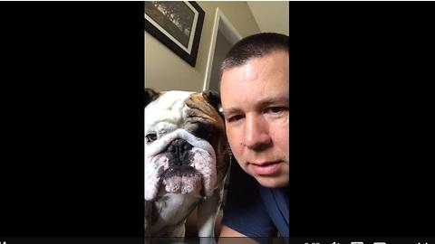 Bulldog sees video of himself, attacks it!