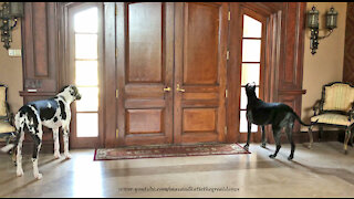 What Happens When The Great Dane Security System Goes Off