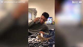Lizard hangs up owner's cell phone call using tongue - 1