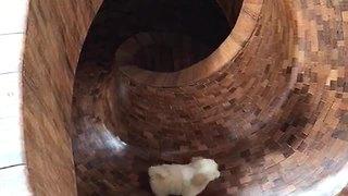 Adorable Little Puppy Enjoys Indoor Slide