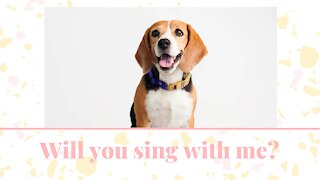 Talented and adorable beagle, sings with all of his heart!