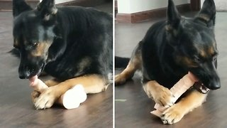 naughty or nice- Dog playing with naughty toy caught on camera