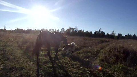 Dog and horse enjoy sunny afternoon walk together