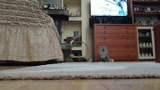 Hidden Camera Captures Cat's Strangely Hilarious Behavior