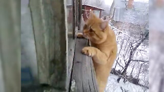 Cat Crying Last Seconds Before Death