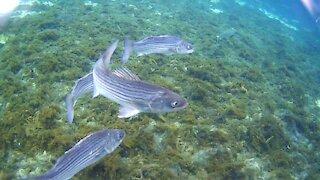 God's Amazing Underwater Creation