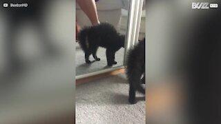 Gatinha vê o seu próprio reflexo pela primeira vez