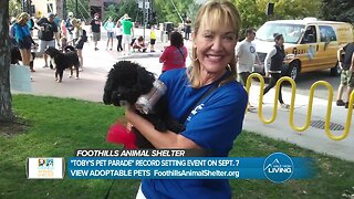 Foothills Animal Shelter And Denver7: A Thank You For Toby's Pet Parade