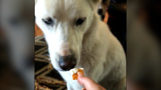 Spoiled Pup Eats Only Crackers Dipped In Cream Cheese