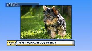 Top 7 most popular dog breeds