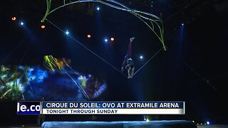 Cirque Du Soleil performing 'OVO' at ExtraMile Arena