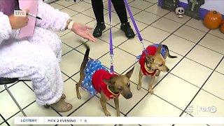 Halloween pet costume parade at Gulf Coast Humane Society