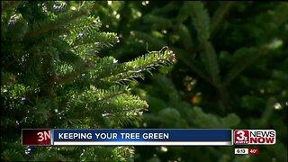 Courtney's Corner: Keeping Your Christmas Tree Fresh