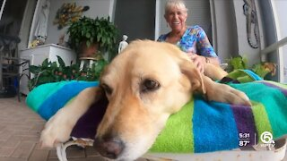 74-year-old woman fends off alligator to save dog