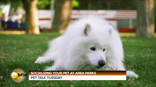 Pet Talk Tuesday - Socializing your dog